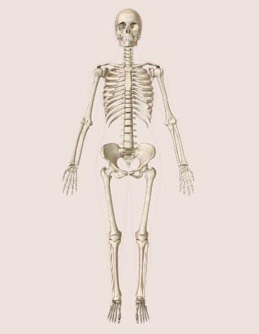 Hệ thống xương